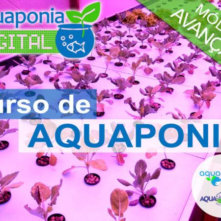 Curso Avançado de Aquaponia